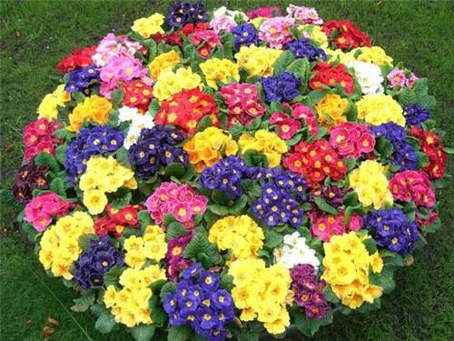 Красивые однолетники и многолетние цветы для клумбы позволяют составить привлекательные композиции