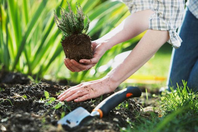 В июне осуществляется посев цветущих, огородных и зеленых культур на гряды и цветники открытого грунта