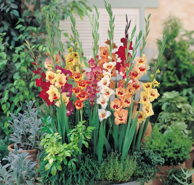 Чтобы вырастить хорошие цветы, необходимо не просто посадить их в землю, а создать им в процессе развития — благоприятные условия