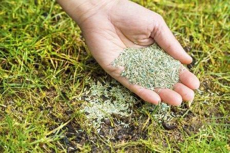 Как правильно сеять газонную траву своими руками