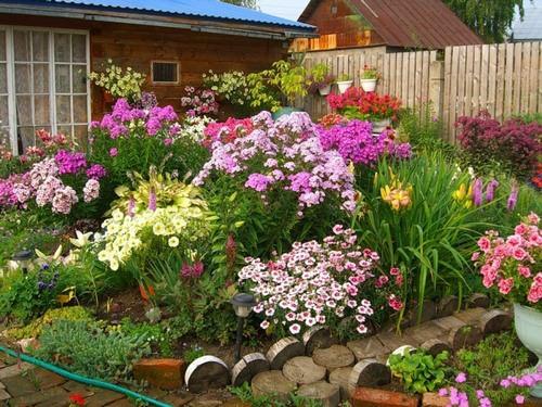 Засухоустойчивые цветы для клумбы – оптимальный вариант выращивания на солнечном участке в южных регионах