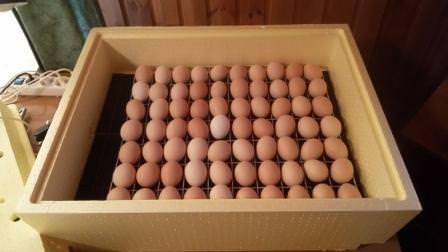 Зная, как сделать инкубатор своими руками, можно хорошо сэкономить при создании собственной птичьей фермы
