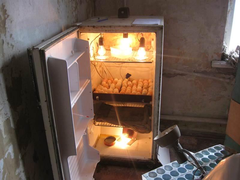 Поломанный или просто старый, уже не используемый по прямому назначению холодильник отлично подходит для разведения птиц