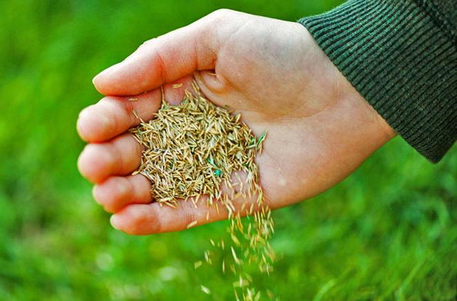 После предварительной подготовки почвы можно начинать посев семян