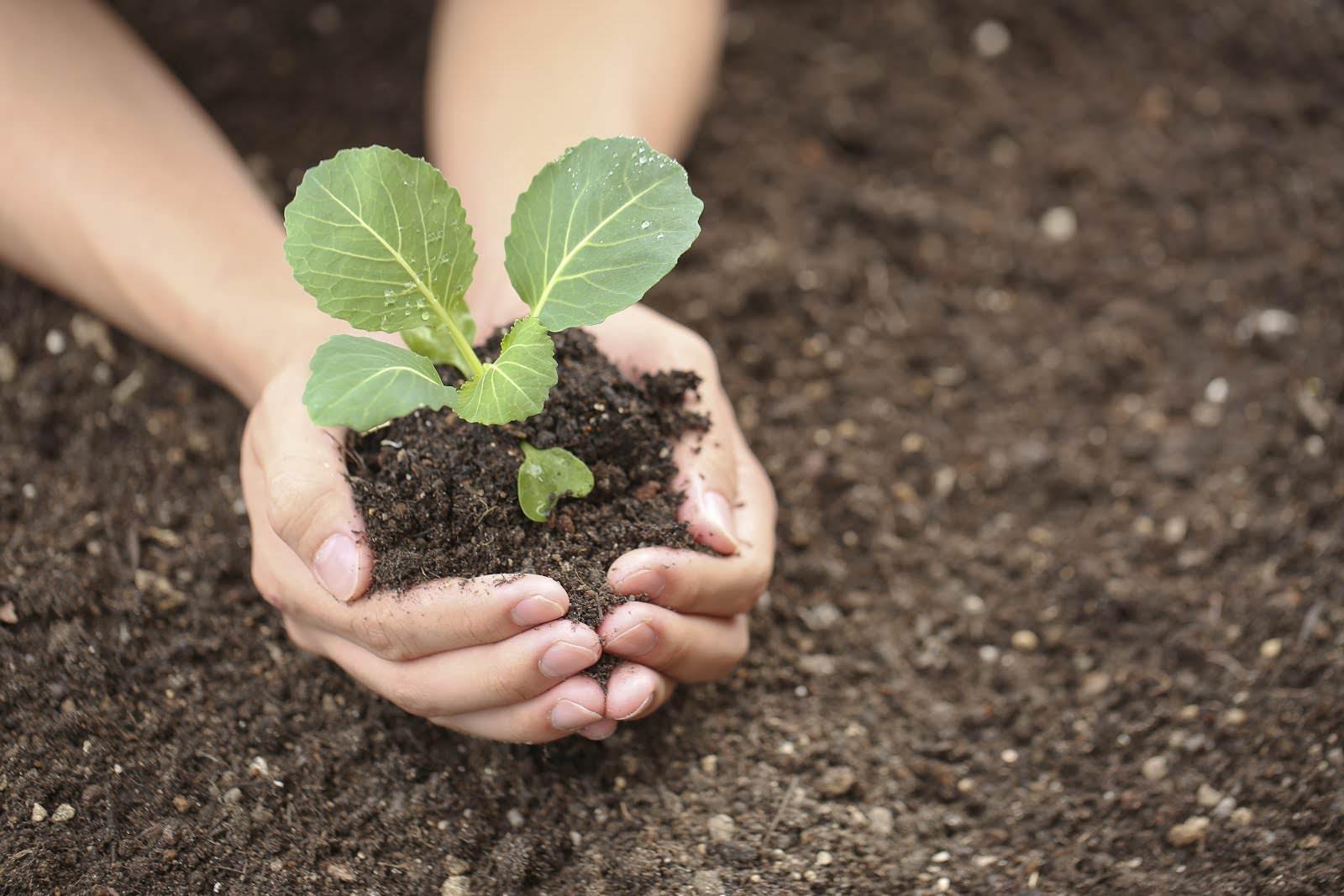 Существуют общепринятые принципы посадки рассады, которые пришли к нам ещё от бабушек и дедушек