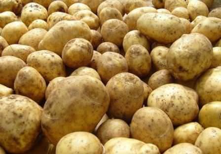 Существуют самые разнообразные препараты для обработки картофеля