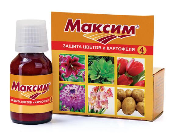 Отличным контактным фунгицидным протравителем выступает препарат Максим