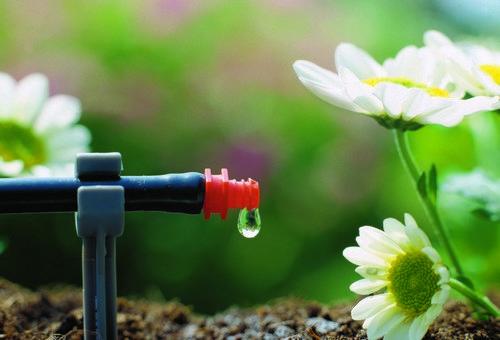 Оптимальным решением будет организация системы капельного полива в теплице