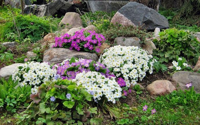 При выборе флоры учитываются сроки цветения, совместимость с другими цветами и другие факторы