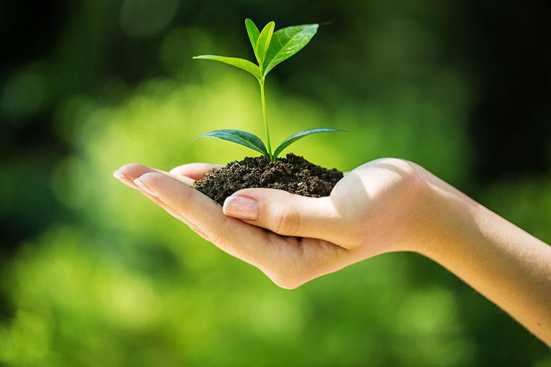 essay grow more trees in school
