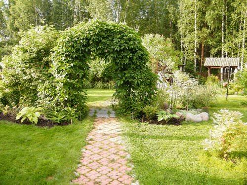 Вьющиеся растения являются отличным декором для дачного участка