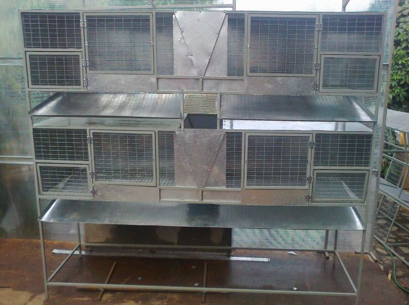 Кролики хоть и относятся к неприхотливым животным, но все же строить клетки и размещать их лучше, придерживаясь советов опытных заводчиков