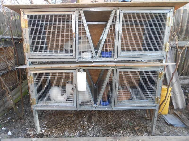 Размеры клеток для кроликов должны быть следующими: длина - 140 см, ширина и высота - по 70 см.