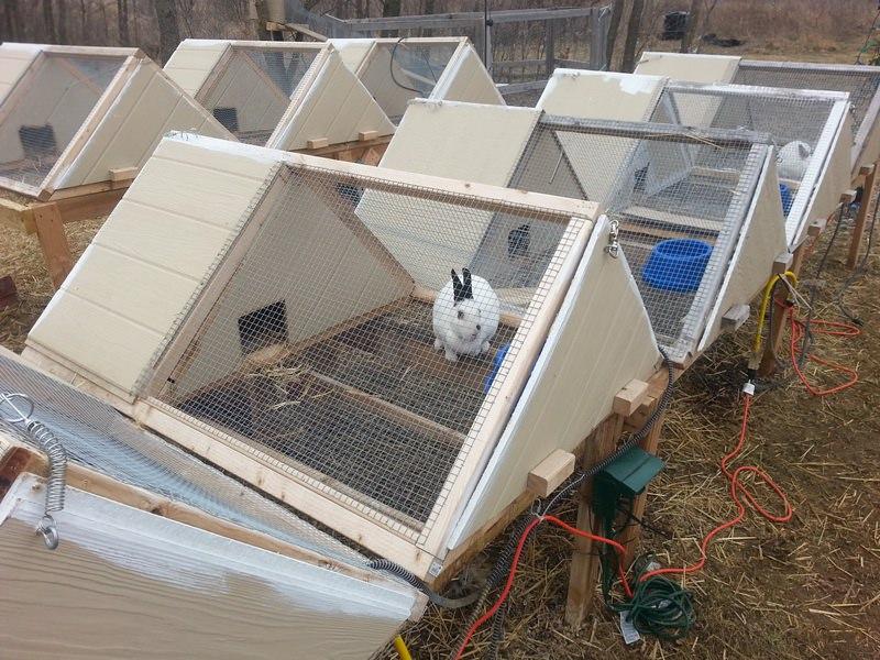 Решив разводить кроликов, придется задуматься о конструкции с гнездовым отделением