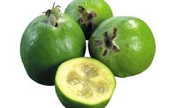 Фейхоа – экзотическая ягода, в которой содержится огромное количество витаминов и микроэлементов