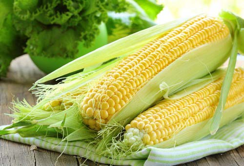 Кукуруза культивируется по всему миру