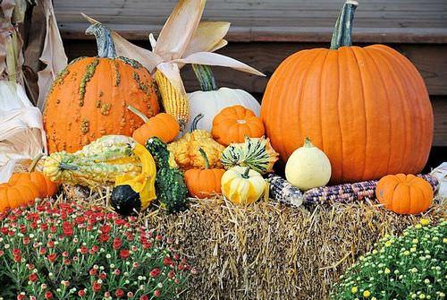Бахчевые культуры представлены плодовыми овощными культурам, выращиваемыми на бахче