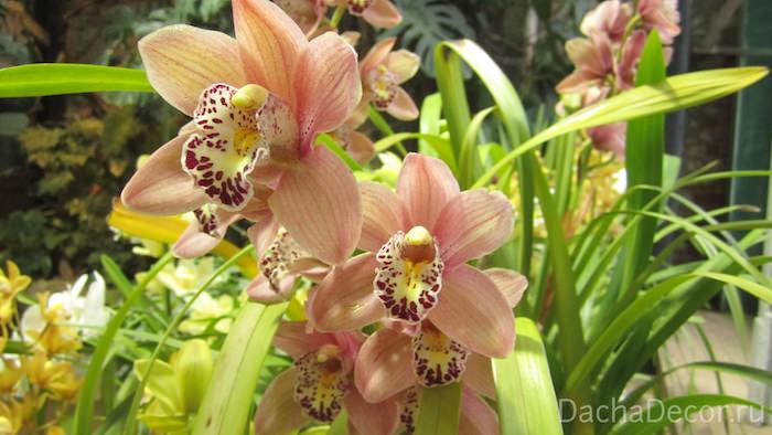 Для выращивания орхидей необходимо понимать их особенности © DachaDecor.ru