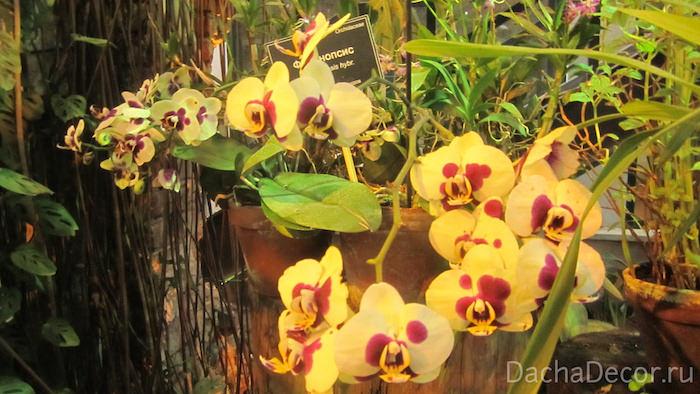 Сейчас орхидеи в нашей жизни являются не только прекрасным решением при выборе подарка, больше — многие покупают их для украшения интерьера дома или офиса © DachaDecor.ru