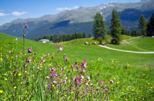 Одним из наиболее простых и доступных вариантов является луговой газон