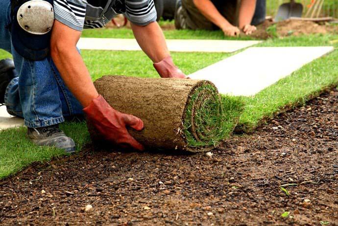 Дорогостоящие рулонные газоны в последние годы пользуются завидной популярностью благодаря привлекательному внешнему виду