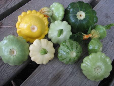 Польза и вред патиссонов хорошо известны потребителям и огородникам