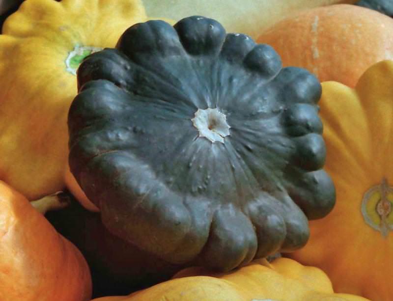 Сорт Гоша отличается стабильно высокой урожайностью и устойчивостью к гнили и заболеваниям