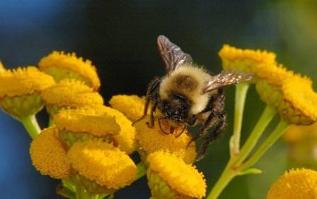 Перед тем как приобрести несколько ульев и открыть собственную пасеку, необходимо изучить пчеловодство для начинающих