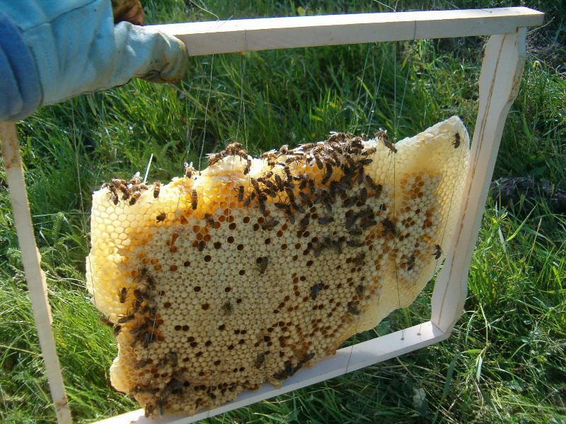 Не отказывайтесь от помощи опытных пчеловодов