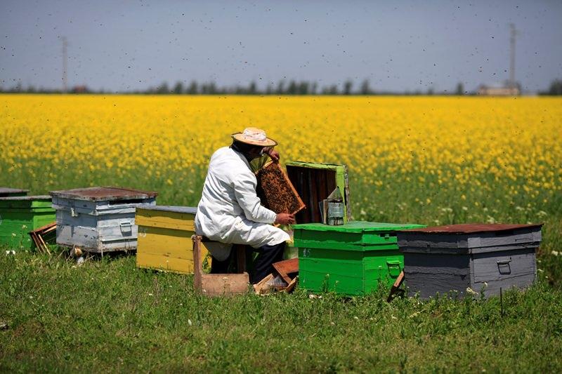 Чтобы пчелам было комфортно, нужно установить ульи летками на восток