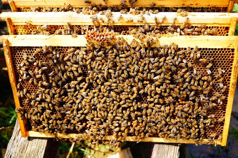 Некоторые пчеловоды, чтобы немного сэкономить, делают ульи своими руками