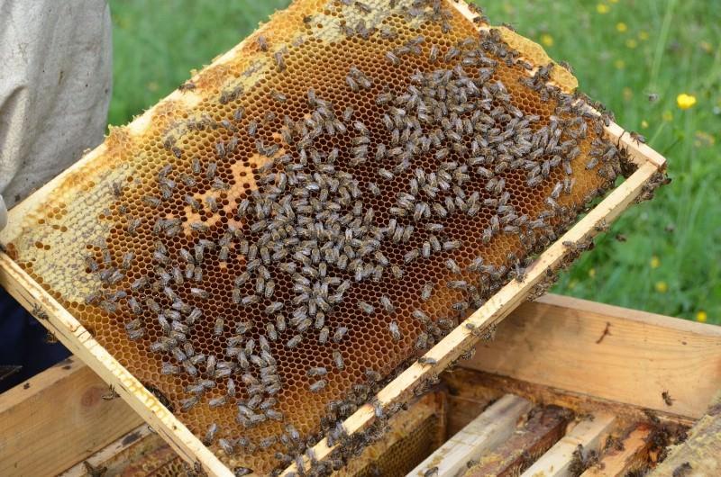 Внимательно следите за матками и рабочими пчелами