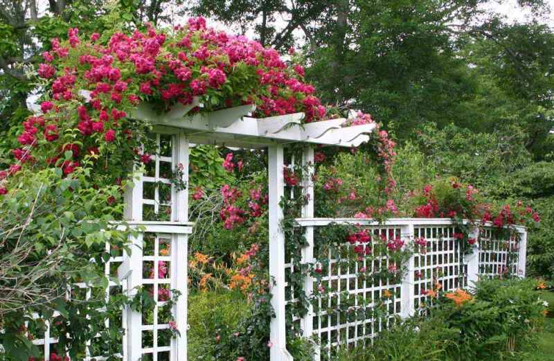 Свое начало пергола получила в качестве опоры для винограда и уже впоследствии стала популярной среди садоводов