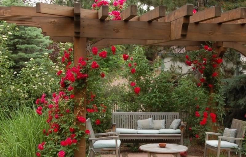 В настоящее время арки для плетистых растений набирают большие обороты