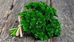 Необходимые для поддержания иммунитета корень петрушки и её зелень одинаково хорошо хранятся при разных способах заготовки