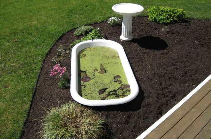 В водоем из старой ванны можно высаживать самые разнообразные виды водорослей