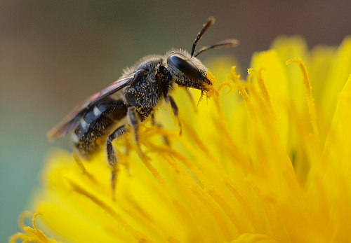 Чтобы избавиться от пчел, нужно знать, какое средство позволит отвадить насекомых надолго