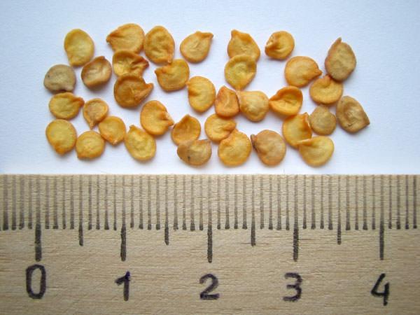 Самое первое, что нужно сделать при подготовке семенного материала к посеву – это произвести его калибровку