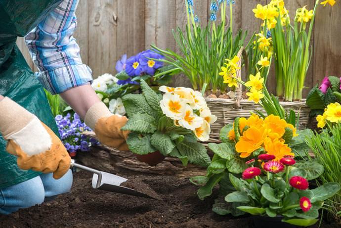 снять цветы в грунт в апреле как убрать жевательную