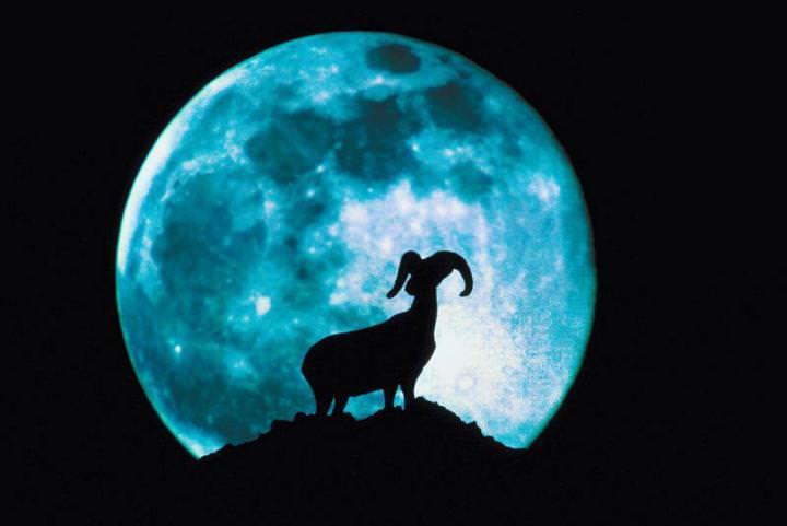 Если луна в Овне, то посадочные мероприятия лучше отложить