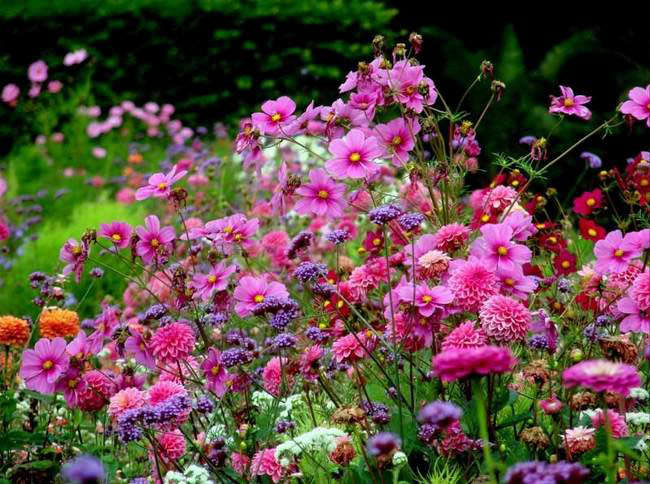 Однолетники – это группа цветов, которые зацветают в тот же сезон, в который их сеют, а к концу вегетационного периода погибают