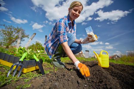 Посев и выращивание свёклы должны осуществляться в соответствии с правилами агротехники