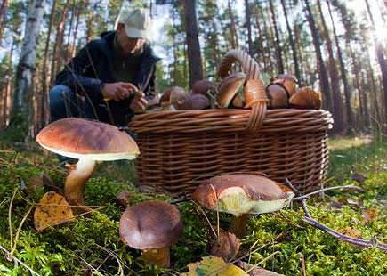 В Башкирии произрастает множество разновидностей грибов