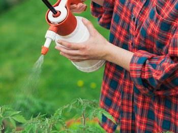 Многих начинающих огородников волнует вопрос, чем можно опрыскивать помидоры