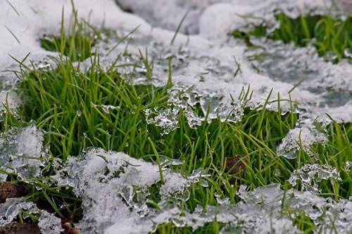 Когда последний раз косить газон перед зимой