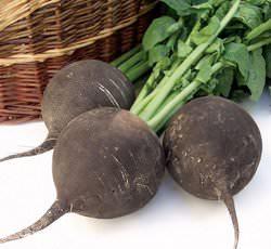 Многие овощеводы-любители предпочитают сеять редьку в Сибири в условиях летне-осеннего оборота