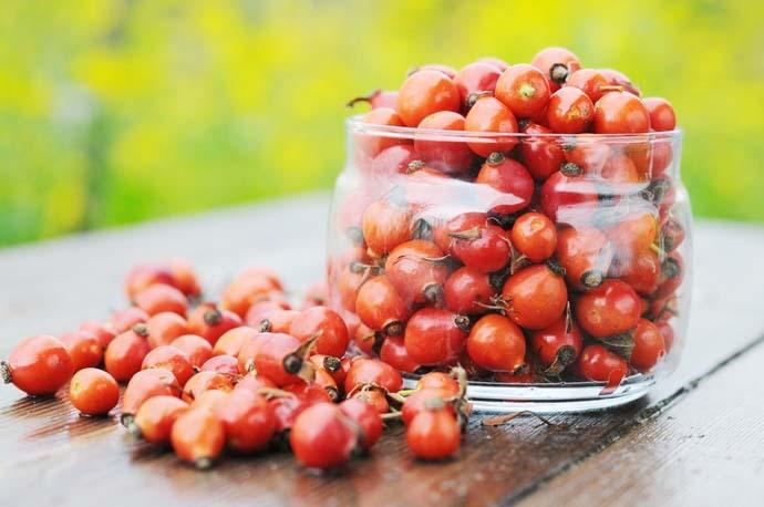 Несмотря на столь огромное число полезных свойств плодов и семян растения, лучше не увлекаться шиповником, в неумеренных дозах он может принести вред