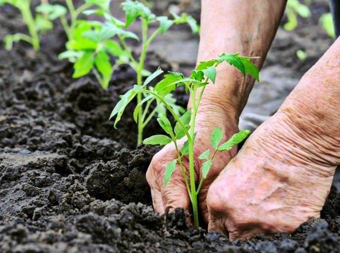 Необходимо планировать посадки так, чтобы не было загущения растений