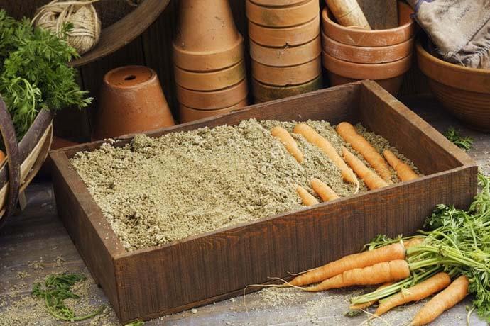 На сегодняшний день морковь можно хранить в ящике с песком