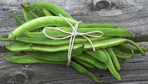 Стручковая фасоль – популярная и вкусная овощная культура